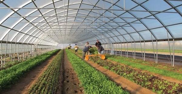 شهرستان محلات در حوزه تولید گل و گیاه به عنوان یک برند