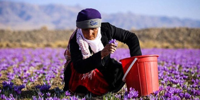 زعفران با نام و برند ایرانی به مصرف کننده نهایی