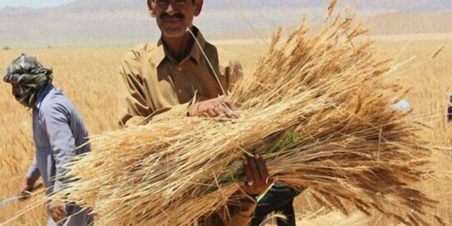 برندسازی محصولات کشاورزی در استانها باید تقویت شود
