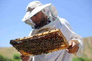 قطب برند عسل کشور در آذربایجان شرقی