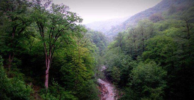 خطر حذف جنگلهای هیرکانی از ثبت جهانی؟