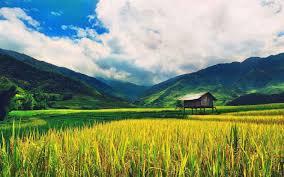 متوسط سهم صادرات محصولات کشاورزی گیلان از کل صادرات استان طی پنج سال اخیر از ۴۲ درصد به ۵۵ درصد افزایش یافت.