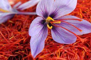 سه نام تجاری زعفران در لرستان ثبت شد