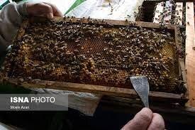 عسل، برند شهرستان گرمی/ اردبیل