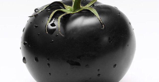 صادرات برند گوجه فرنگی سیاه ایران به کشورهای روسیه و قطر