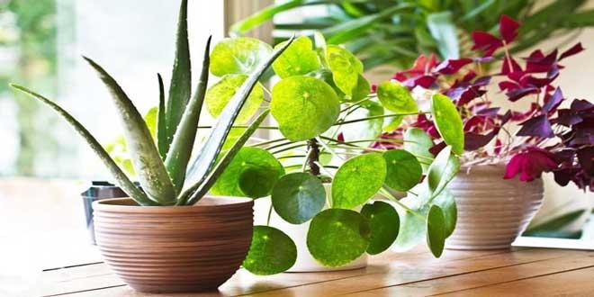 گیاهان مقاوم به نور مستقیم خورشید؛ معرفی و راهنمای خرید